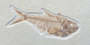 Read more about the article FOSSIL COMPETITION WINNER